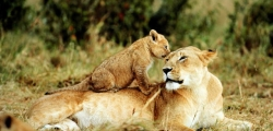 Ruaha & Mikumi 4 nights / 5 days safari