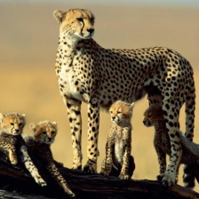 7 nights / 8 days - Tarangire, Ngorongoro, Serengeti and Manyara Safari