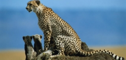 4 Nights / 5 Days Manyara, Serengeti, Ngorongoro & Tarangire Safari