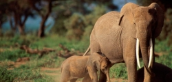 1 night / 2 days Tarangire National Park Safari