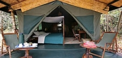 Gombe Luxury Tented Camp